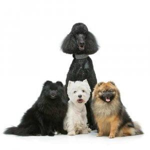 Dog Urns